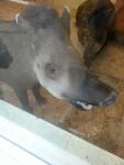 tapirs's picture