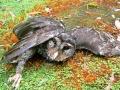 wombat's picture